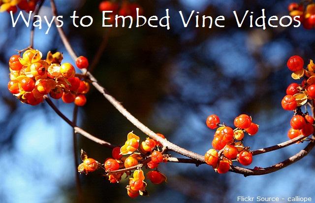 Ways to Embed Vine Videos